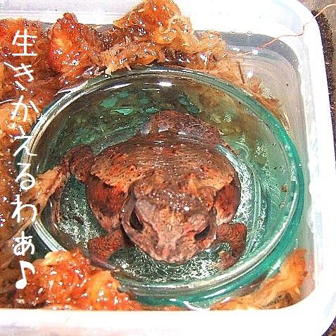 水浴ヒキちゃん(3)
