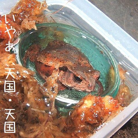 水浴ヒキちゃん(2)