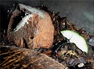 白いヒゲジロ(1)