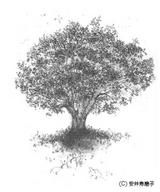8月14〜23日守護樹 榎