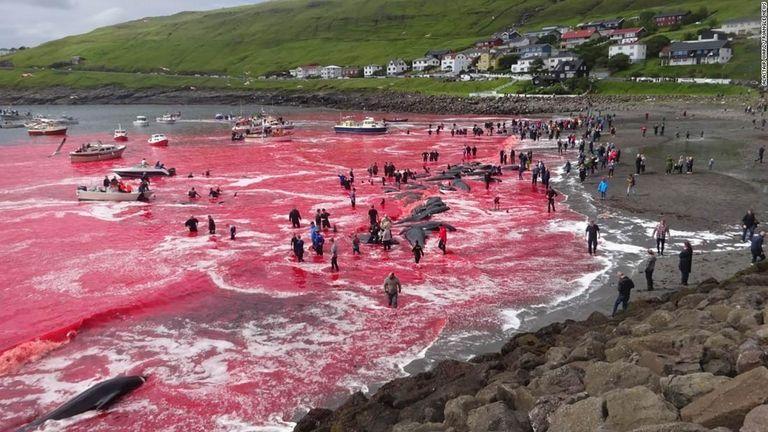 【反捕鯨】フェロー諸島の鯨漁で海が赤く染まる写真 保護活動家「動物を殺して楽しむ野蛮な国」と批判 漁民「大切な食料だ」と反論★4