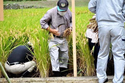 献穀米抜穂式2021-107