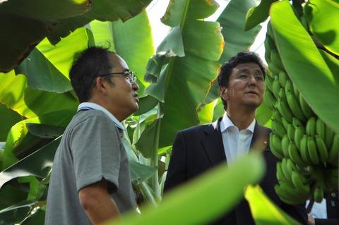 ひかりバナナ-123