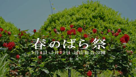 春のばらまつり2019