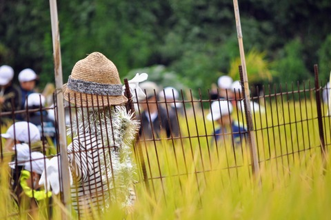 伊保木_収穫祭2018-63