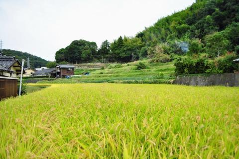 高村農園稲刈り_051