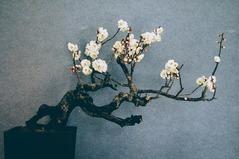 梅まつり_0062