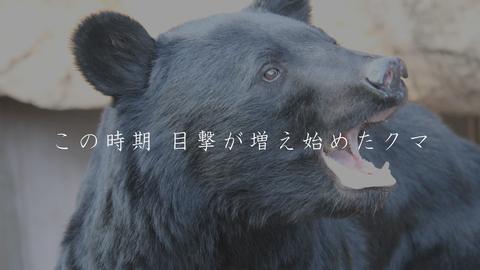 クマ目撃情報HD2019