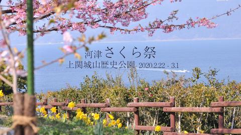 城山歴史公園桜まつりHD