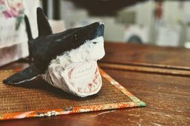 サメ_ウェルカム-1