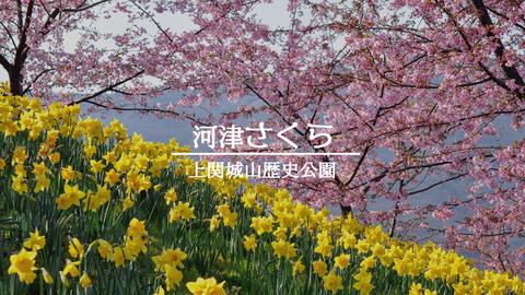 河津さくら城山歴史公園