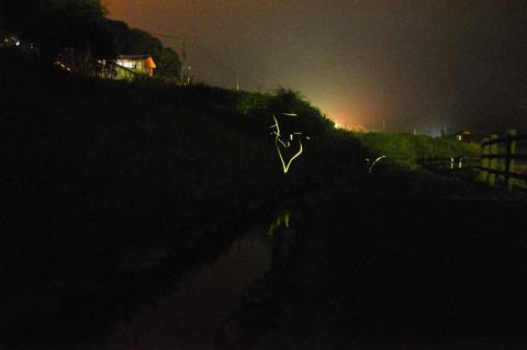 hotaru_束荷2018-64-1