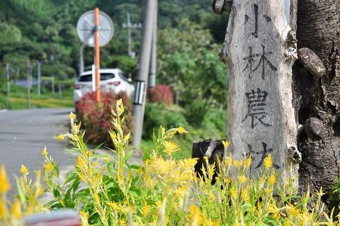 献穀米抜穂式2021-7
