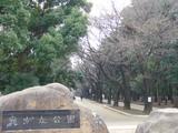 お花見(光が丘公園 赤塚口)