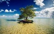 nature-landscapes_widewallpaper_tree-in-the-water_21133