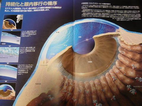 角膜目当て