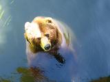 カドリー熊