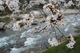 匹見川沿いアップ