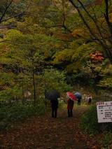 紅葉 観光客 傘