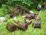 倒木の撤去_R