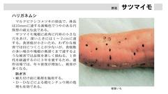 ●小鹿野町農産物栽培マニュアル