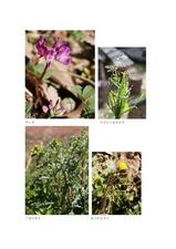 谷津田に咲く春を告げる野の花04