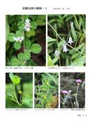 入山谷津の植物1_1