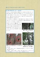 地域の森をみんなで守ろう(神奈川県)_07