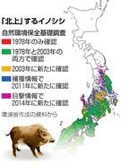 イノシシ猛進(朝日新聞Digital)