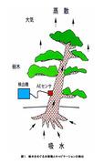 樹木をめぐる水移動とキャビテーションの検出