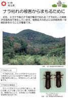ナラ枯れの被害からまもるために(埼玉県)_1