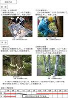 ナラ枯れの被害からまもるために(埼玉県)_3