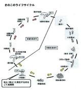 キノコのライフサイクル1