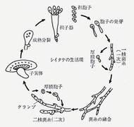 椎茸の生活と性質