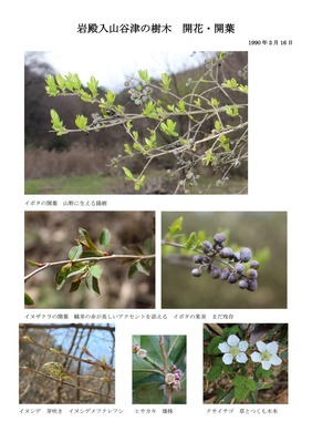 岩殿谷津田の樹木開花・開葉