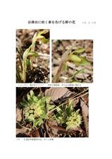 谷津田に咲く春を告げる野の花01
