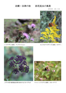 訪花する昆虫たち_1
