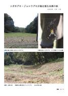 コガネグモ・ジョロウグモが巣を張る谷津の秋_1