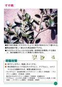 シキミ・サカキ病虫害防除救急マニュアル