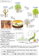 ナラ枯れの被害からまもるために(埼玉県)_2
