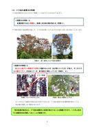 ナラ枯れ被害の基礎知識(新潟県)_4