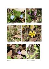 谷津田に咲く春を告げる野の花03