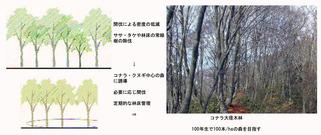 ○景観を考慮した森林管理手法(香川隆英)_02