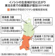 イノシシ東北に猛進(日本農業新聞)