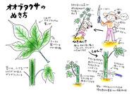 オオブタクサのぬき方(エコシティ志木)