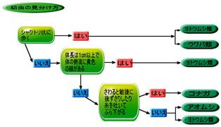 アオムシの見分け方(コナガ)