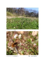 谷津田に咲く春を告げる野の花02