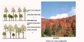 ○景観を考慮した森林管理手法(香川隆英)_14