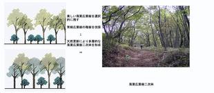 ○景観を考慮した森林管理手法(香川隆英)_10