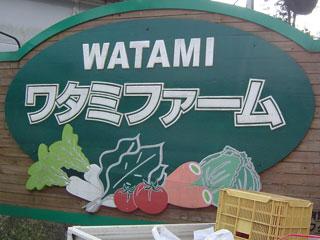 watami1718